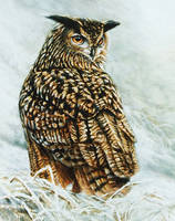 Eurasian Eagle-owl by Wildkunst