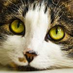 Fimka the Cat