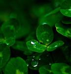 Lucky Drops