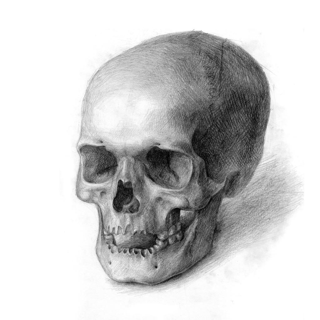 Skull by Asetskaya