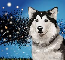 Canine by kfairbanks