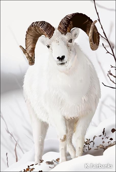Winter Ram (digital drawing) by kfairbanks