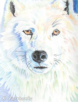 White Wolf (pencil drawing) by kfairbanks