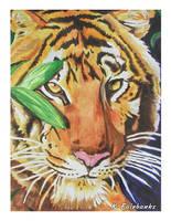 Tiger Portrait (watercolor painting) by kfairbanks