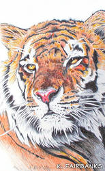 Tiger Yellow Eyes (ball point pen drawing)
