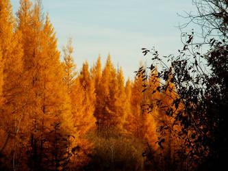 Last fall color huruh...as we see the peek of fall by lasair44
