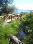 Creek by the Bridge