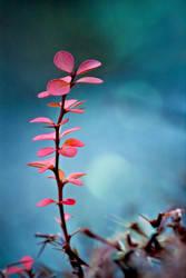 Red leaf 3 by Gatoon2510