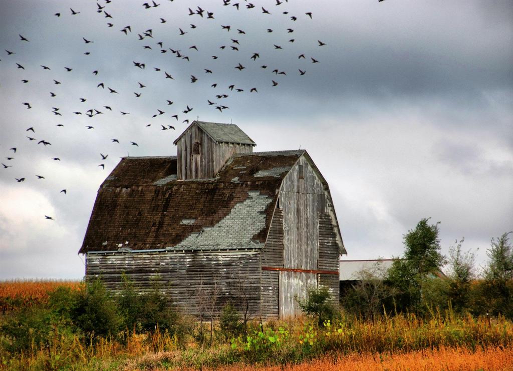 Iowa Farm Buildings 7 by lividity101