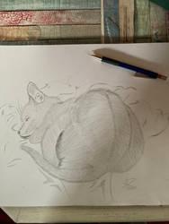 Sleeping Cat - Pencil