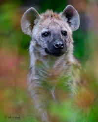 Spotted hyena (Crocuta crocuta) by Hladik99