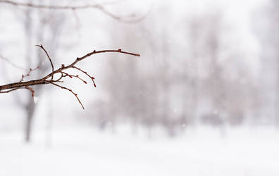 Winter2 by fecklesslytrying