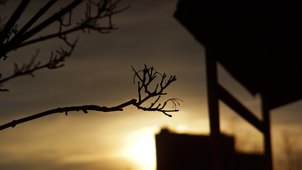 Gren På Träd by boyaka