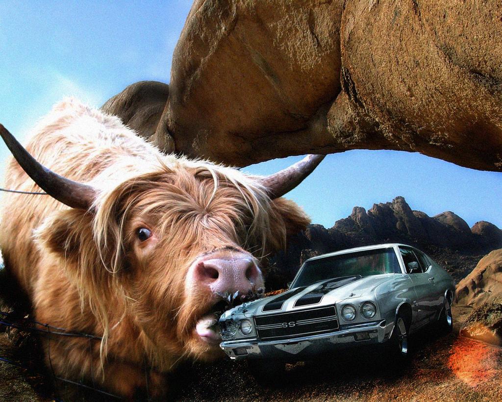 Giant Desert Cow Eats Car, 71