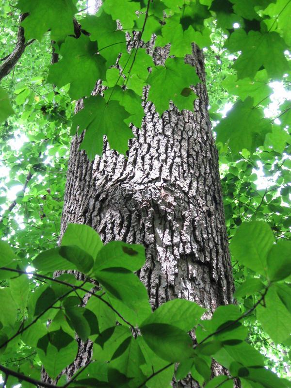 Hidden Oak Group 39