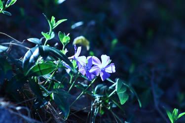 Violet Hues by CalendarCat