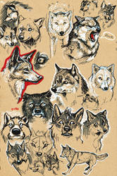Wolves on Brown Paper by FablePaint