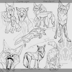 Warmup: Coyotes