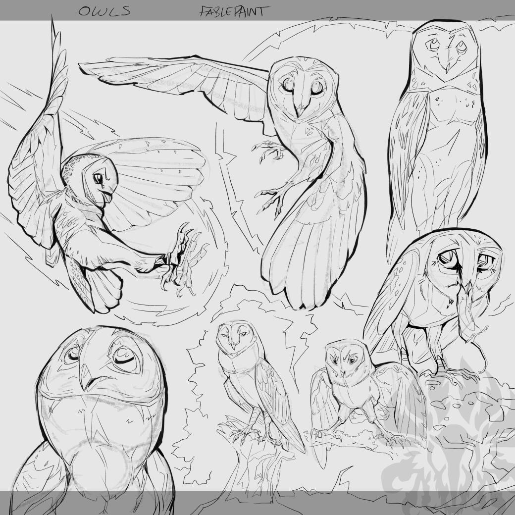 Warmup: Owls