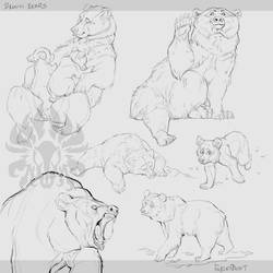 Warmup: Bears