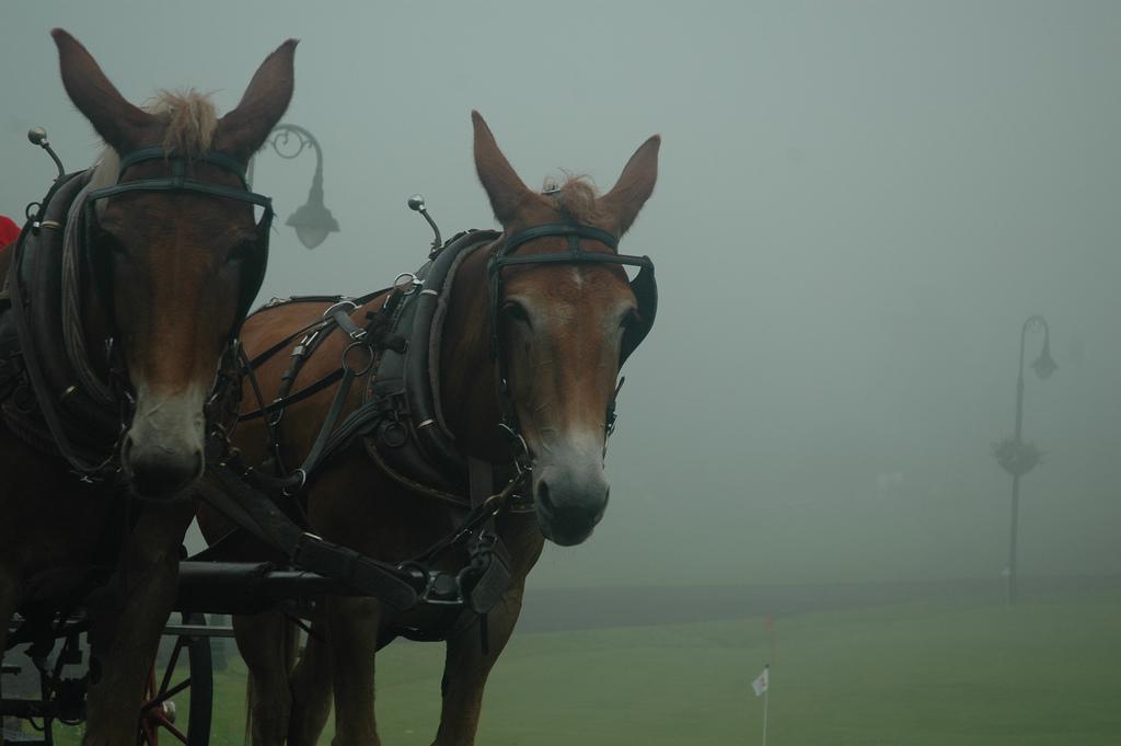 Working Mules by celebdu