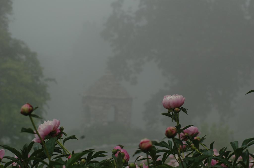 Flowers in the Fog by celebdu