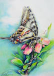 Butterfly by PaintingKim