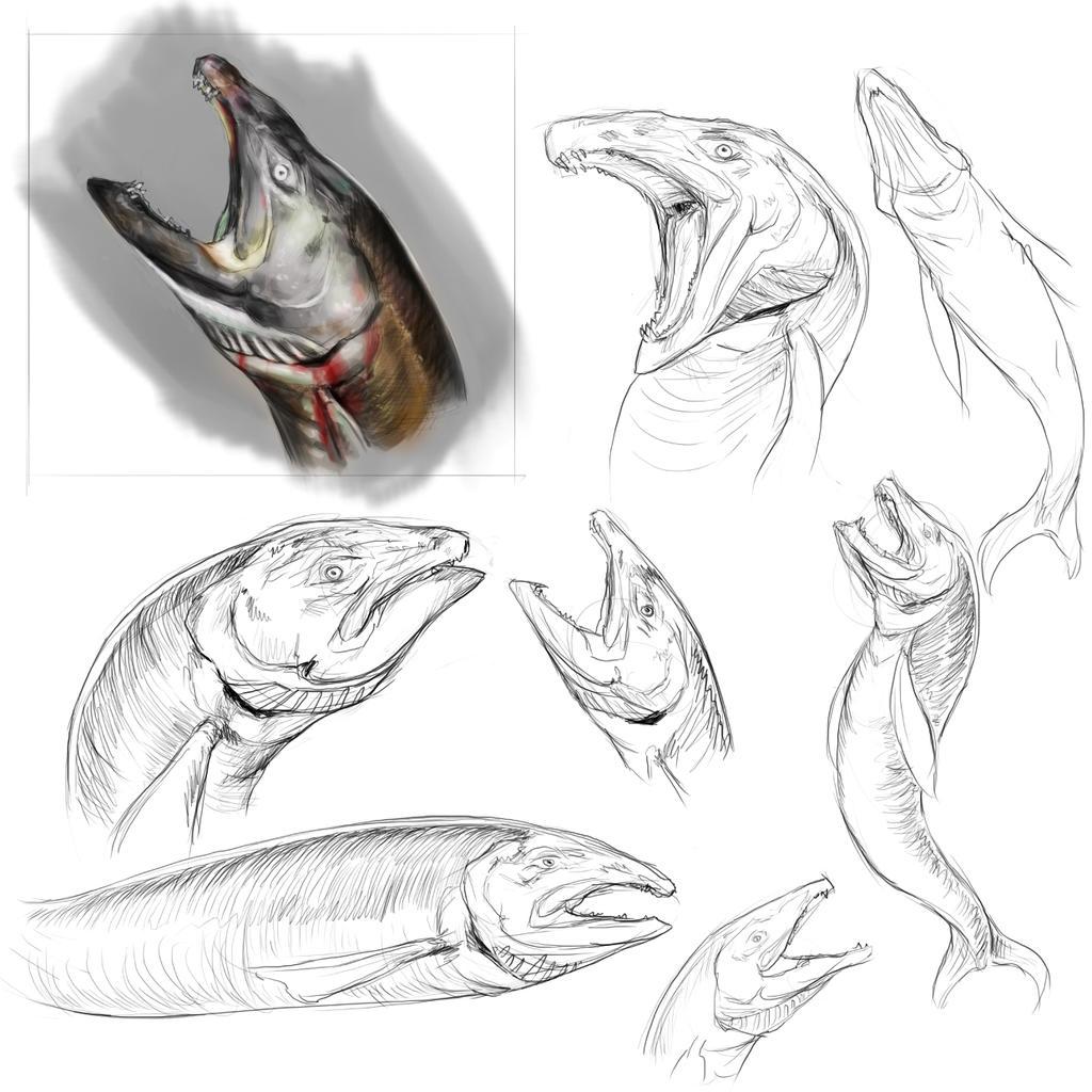 Mean Fish by BinaryDood