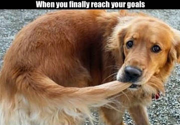 Success Doggo
