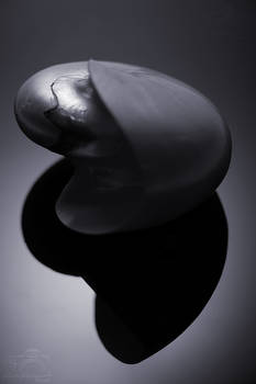 Hommage a Edward Weston IV (Shadow)