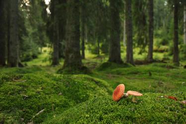 Fly Agaric, the Funny Mushroom by HoremWeb