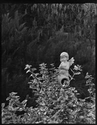 Cupid in the Garden