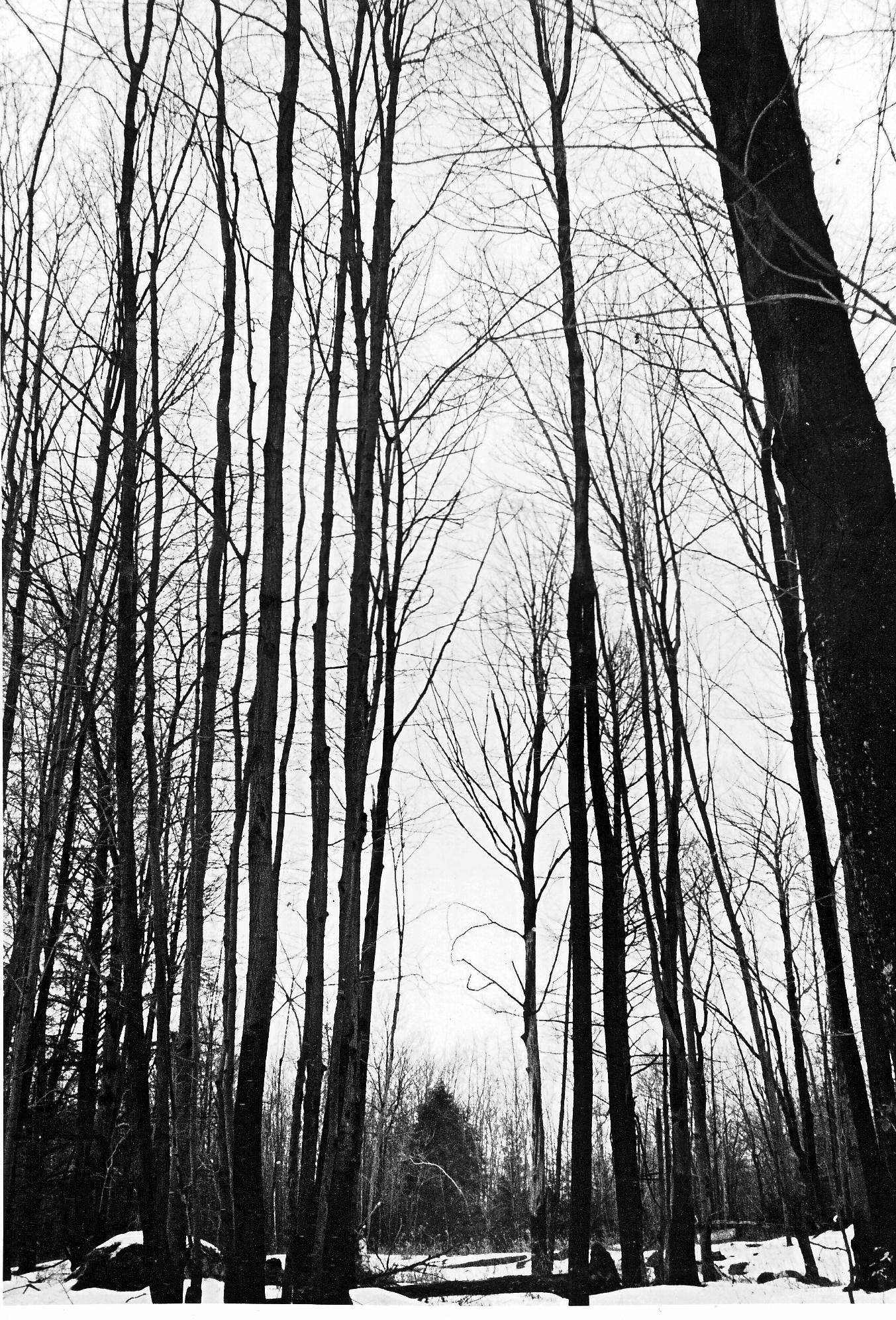 Forest Gap by ThatArtistFeller
