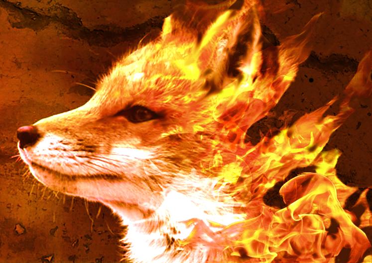 firefox by arkett