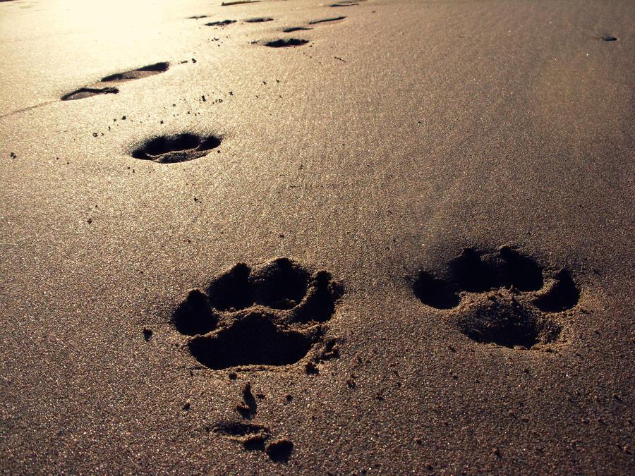 Paw Prints In The Sand By Essjayycee On Deviantart