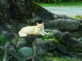 wild_cat by nekretron