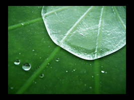 water_vs_lotus by nekretron