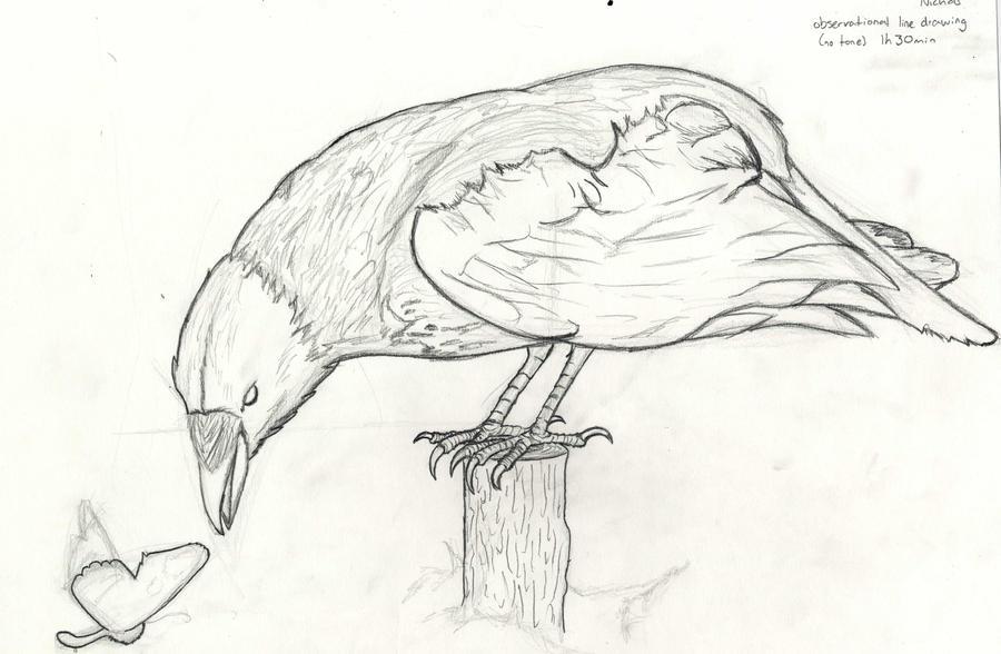 Line Art Practice : Crow line drawing practice by shwabadi on deviantart