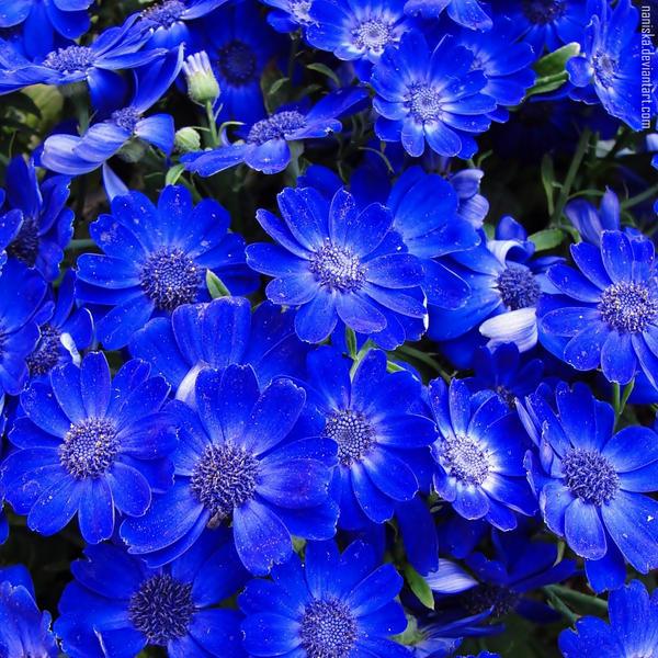 Blue? Me too. by NanisKa