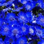 Blue? Me too.
