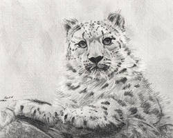 Snow leopard by Catherine-PL