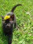 -Billy my cat-stock-D