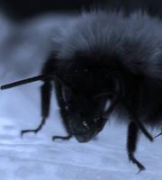 BEE-WARE! by Michawolf13