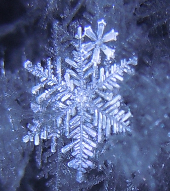 Frost Flake by Michawolf13