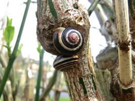 Snails by Michawolf13