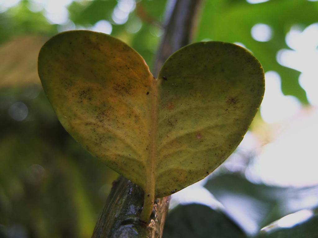 Growing Love by michawolf13