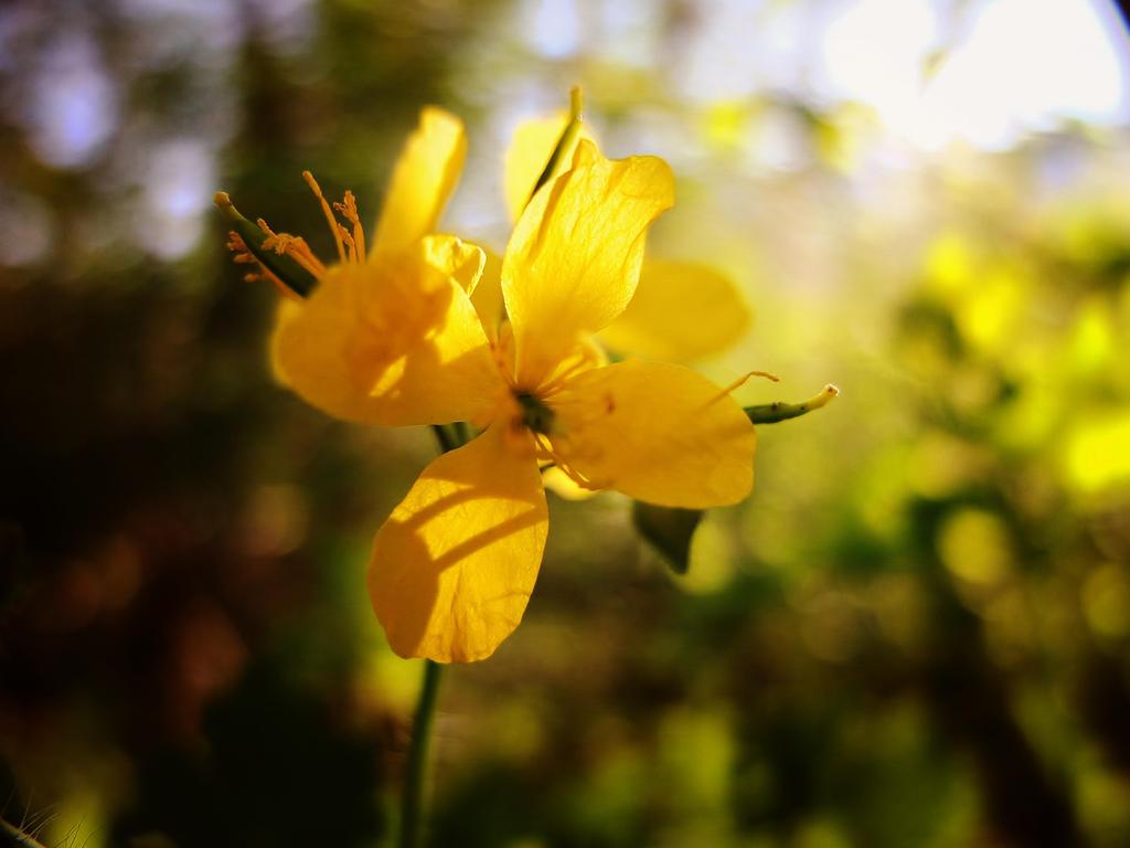 Flower is beautiful by Michawolf13