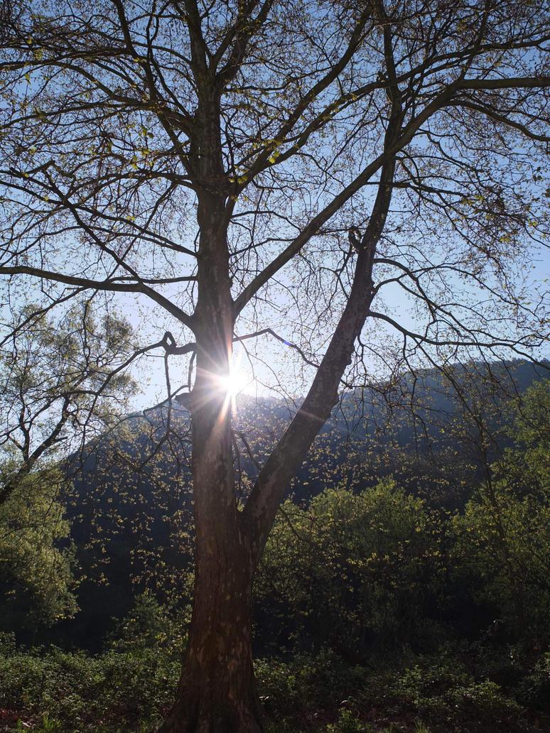 When the sun... by Michawolf13