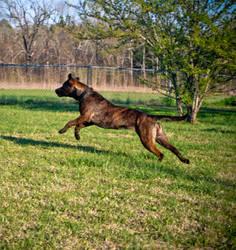 Happy Fetching by Ertxz18