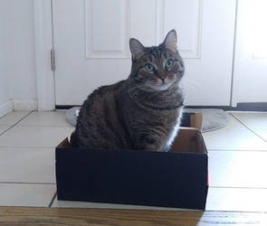 Lilly in a Shoebox